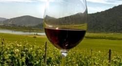 La ruta del vino en Chile